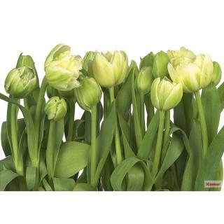 Φωτοταπετσαρία τοίχου Komar 8-900 Tulips 3.68 cm x 2.54 cm